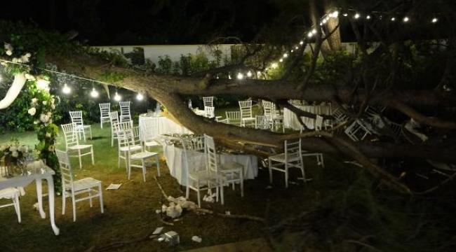 Kır düğününde 'ağaç' devrildi: 2'si ağır 10 yaralı
