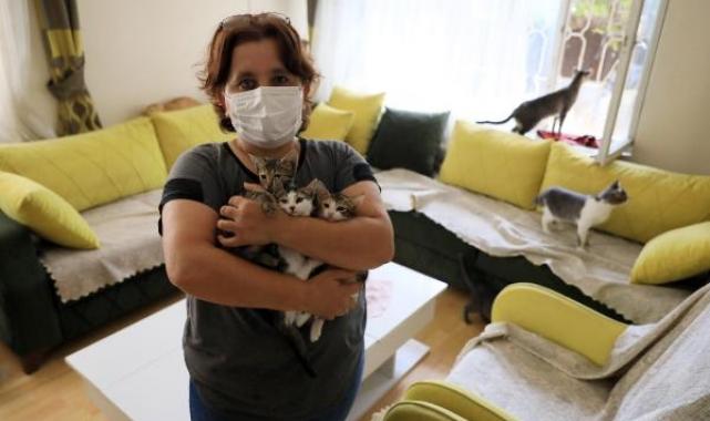 Emekli maaşını kedilere harcadı, icralık oldu