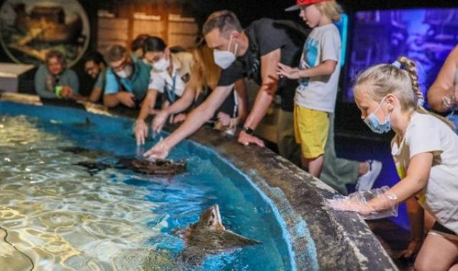 Kartal başlı vatozları elleriyle beslediler