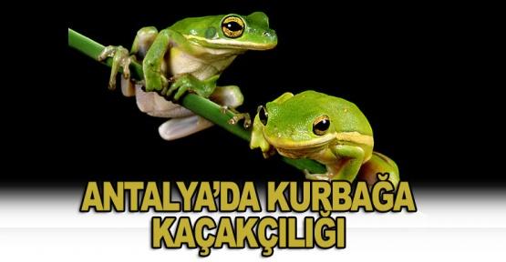 Antalya'da Kurbağa Kaçakçılığı