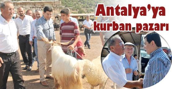 Antalya'ya kurban pazarı