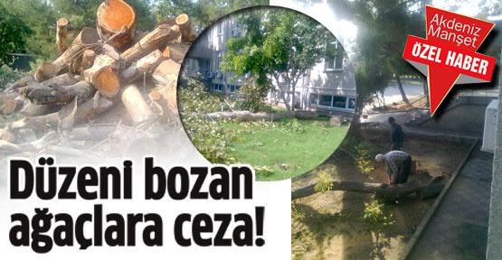 Düzeni bozan ağaçlara ceza!