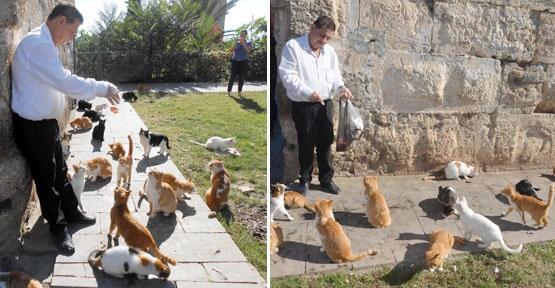 Her gün 90 kedi besliyor