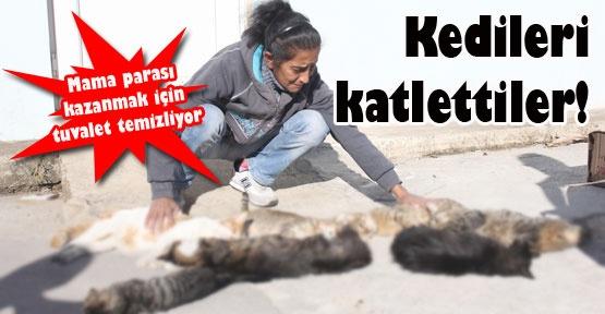 Kedileri katlettiler!