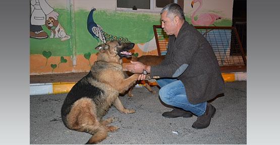 Manavgat'ta hayvan  dostlara yeni mekan