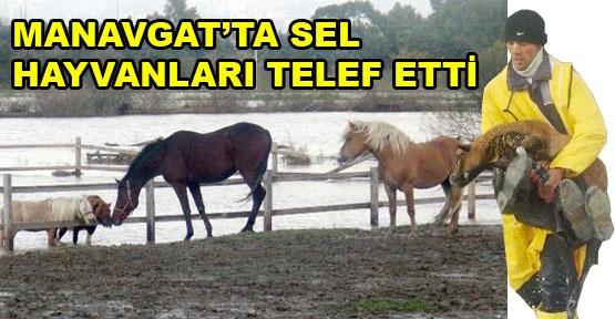 Manavgat'ta sel hayvanları telef etti